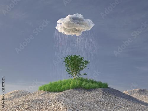 Fotografia, Obraz rain cloud watering a green tree in the desert