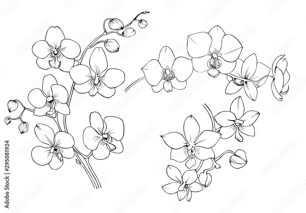 Fototapeta Orchid black and white vector drawing