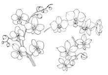 Orchid Black And White Vector ...