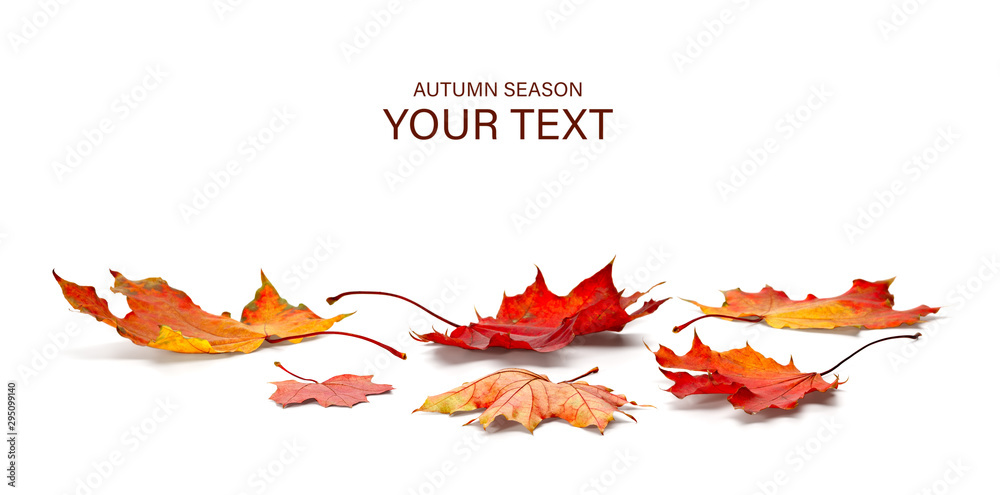 Fototapety, obrazy: autumn season concept, maple leaf isolated on white background