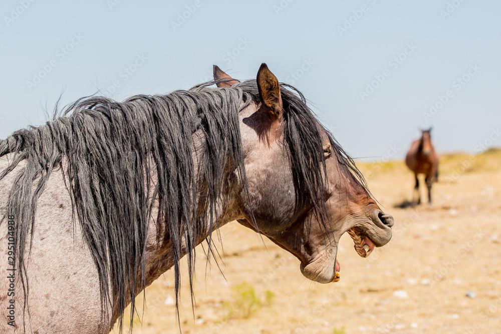 Fototapeta Wild Horses