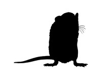 Graphical Silhouette Of Rat Isolated On White Background,vector Illustration,symbol