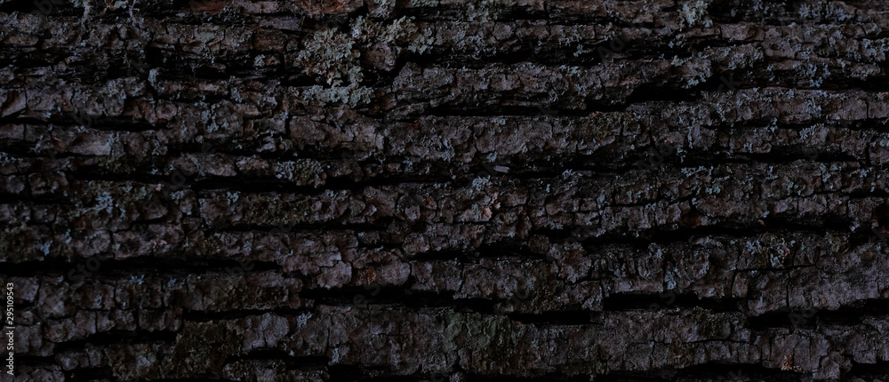 Fototapety, obrazy: Wood bark texture. Dark wooden background. Tree close up. Nature backdrop.  Horizontal Wallpaper.