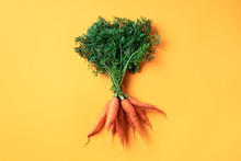 Bunch Of Young Carrots With Green Tops On Trendy Yellow Background. Top View. Copy Space. Vegan And Vegetarian Concept