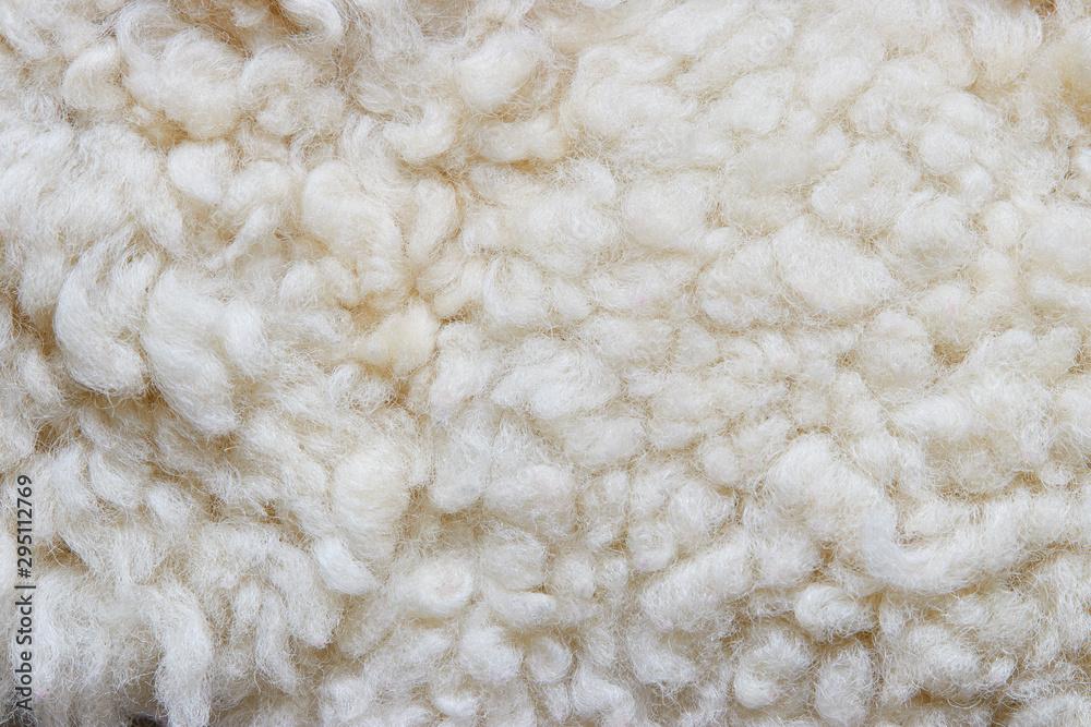Fototapeta White soft wool background, natural sheepskin rug.