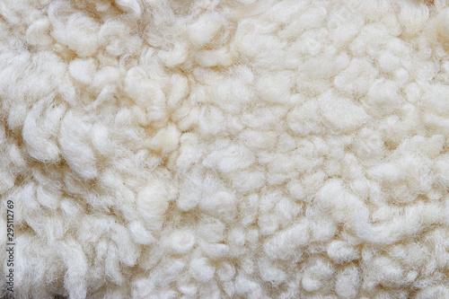 Fotografie, Obraz White soft wool background, natural sheepskin rug.