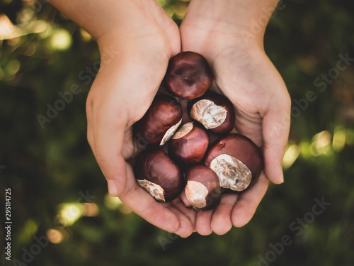 girl holding handful of chestnuts Tablou Canvas