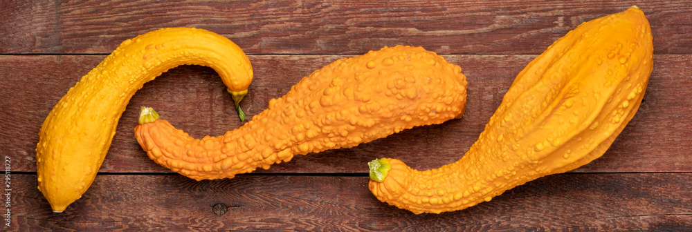 Fototapety, obrazy: ornamental gourd over rustic wood