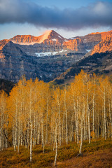 Fototapeta Krajobraz Autumn dawn with golden Aspens and Timpanogos, Utah, USA.