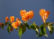 Pretty Flowers Of Tropical Pla...