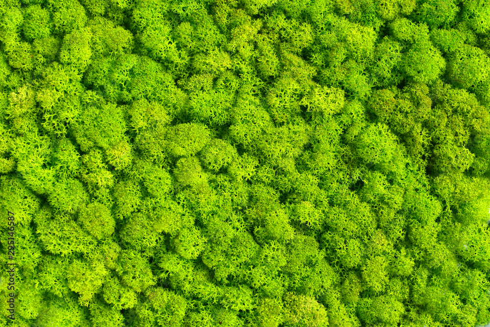 Fototapety, obrazy: Green decorative moss texture wallpaper