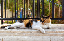 Cats Of Malta - Stray Fluffy C...