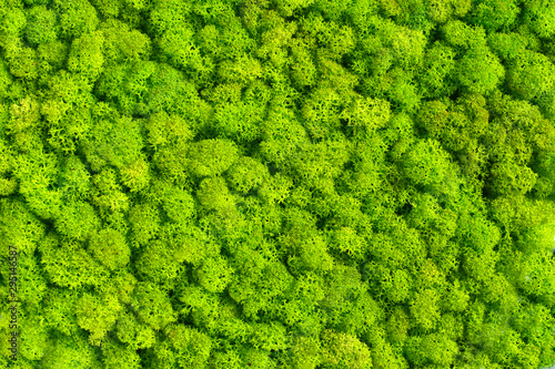 Fototapeta Green decorative moss texture wallpaper obraz