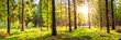 Leinwanddruck Bild - Beautiful, green forest with moss-covered soil and bright sun shining through the trees