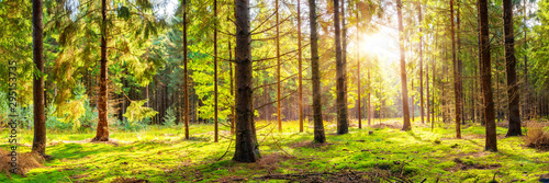 Foto auf Gartenposter Baume Beautiful, green forest with moss-covered soil and bright sun shining through the trees