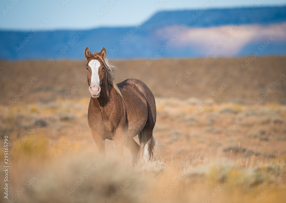 Fototapeta Wyoming Wild horses
