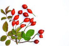 Rosehips On A White Background
