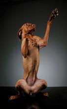 Studio Shot Of An Adorable Magyar Vizsla  Looking Funny While Standing On Hind Legs