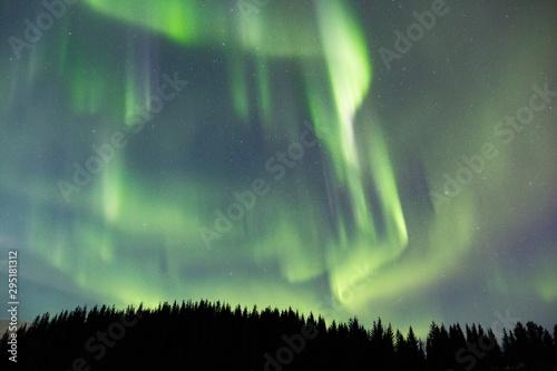 Beautiful low angle shot of the breathtaking aurora and fir trees Tapéta, Fotótapéta