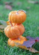 Autumn Pumpkin Thanksgiving Halloween Background. Festive, Season. Orange, White, Green Fall Colors.