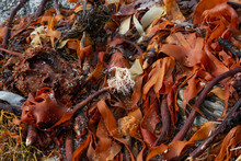 Colourful Mixed Seaweed Washed...