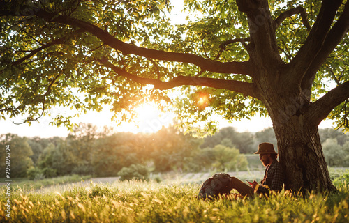 Obraz Hiker using smartphone under tree - fototapety do salonu