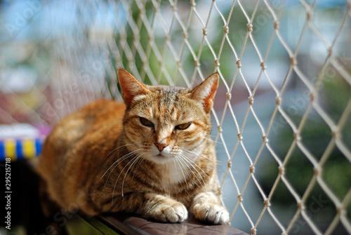 Cat safety net window - fototapety na wymiar