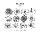 Fototapeta Kwiaty - Collection set of flower and leaves drawing illustration. Black and white with line art on white backgrounds. Hand Drawn Botanical. Nature Vector.