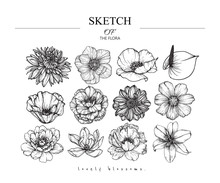Collection Set Of Flower And Leaves Drawing Illustration. Black And White With Line Art On White Backgrounds. Hand Drawn Botanical. Nature Vector.