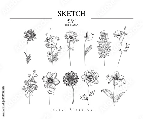Fotografija Collection set of flower and leaves drawing illustration