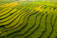 Aerial Top View Of Paddy Rice ...
