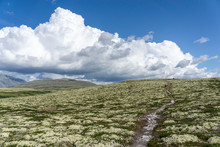 Wanderer Im Nationalpark Rondane, Norwegen