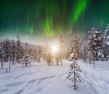 Winter Forest At At Night Under The Northern Lights. Finland.