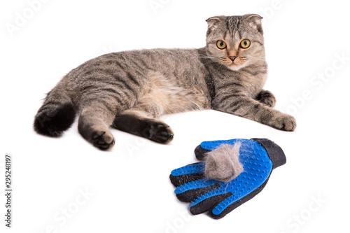 Glove brush Tapéta, Fotótapéta