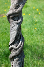 Gnarled Tree Trunk Against Green Grass Background