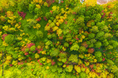 Montage in der Fensternische Pistazie Aerial view of autumn forest in mountain
