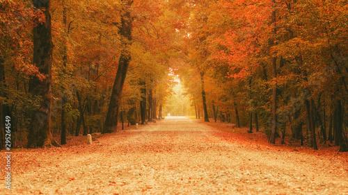 Autumn Fototapeta