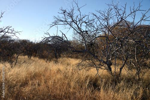 Slika na platnu Steppe, Namib desert, Namibia