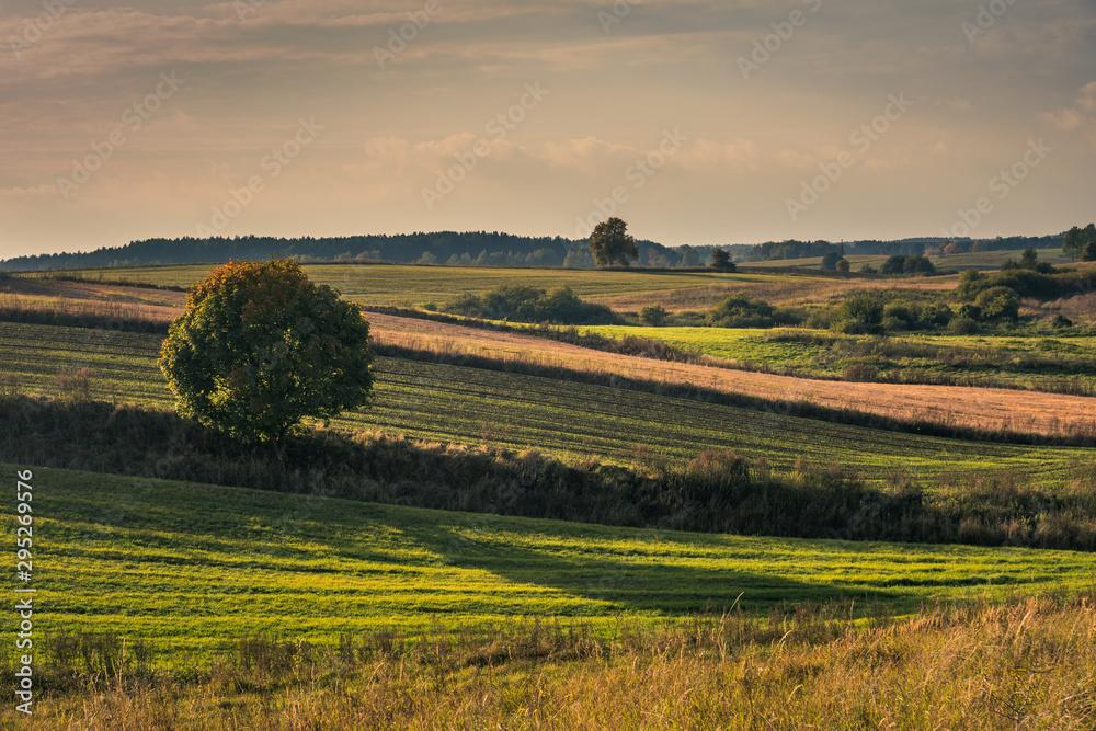Fototapety, obrazy: Masurian meadows at autumn near Banie Mazurskie, Masuria, Poland