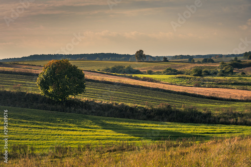 Photo  Masurian meadows at autumn near Banie Mazurskie, Masuria, Poland