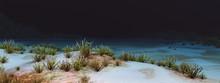 Unterwasser Landschaft Mit Kor...