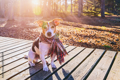 Cute dog in scarf sitting on wooden boardwalk looking at camera Canvas Print