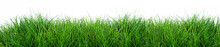 Grass Isolated On A White Back...