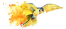 Yellow Parrot Ara Flies Spreading Its Wide Wings. Yellow With A Blue Parrot. Big Parrot. Artistic Watercolor Illustration Of Tropical Bird. Watercolor Stain. Space For Text. Hand Drawn Illustration