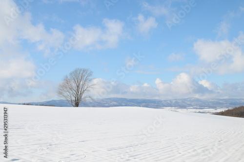 Vászonkép 雪原に立つ大きな木 美瑛町