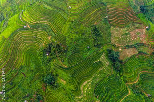 Foto auf Gartenposter Grun Aerial top view of paddy rice terraces, green agricultural fields in countryside or rural area of Mu Cang Chai, Yen Bai, mountain hills valley at sunset in Asia, Vietnam. Nature landscape background.