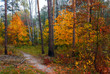 Forest. Good autumn weather for a walk in nature. Autumn colors attract attention.