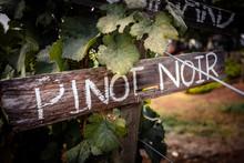 Wooden Sign Of Pinot Noir In Vineyard