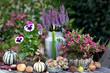canvas print picture - Gartendekoration mit Herbstblumen in Pink und Kerze