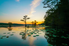 Sunset View With Bald Cypress ...